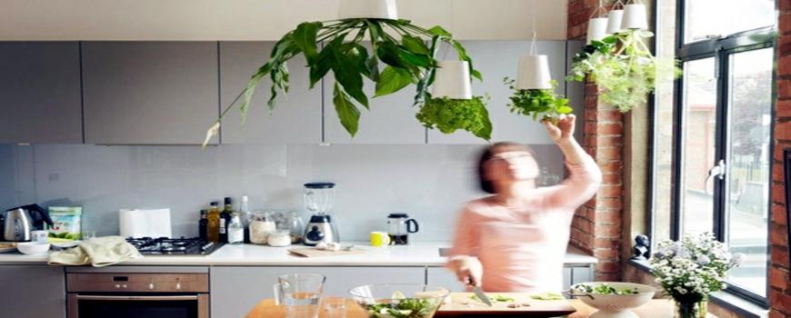 گلدان در آشپزخانه فراموش نشود